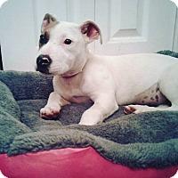 Adopt A Pet :: Ella - Atlanta, GA