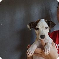 Adopt A Pet :: Yanni - Oviedo, FL