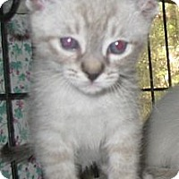 Adopt A Pet :: Lynx - Dallas, TX