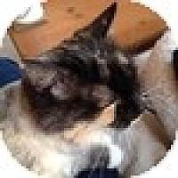 Adopt A Pet :: Edie - Vancouver, BC