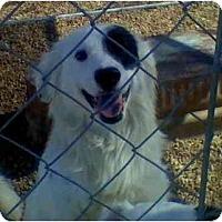 Adopt A Pet :: Cody - Harrisburgh, PA