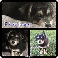 Adopt A Pet :: Prince Hans - El Campo, TX