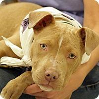 Adopt A Pet :: Trinity - Franklin, VA