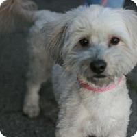Adopt A Pet :: Coby - Canoga Park, CA