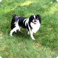 Adopt A Pet :: Apollo - Grafton, MA