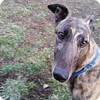Adopt A Pet :: Al - Swanzey, NH
