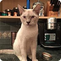 Adopt A Pet :: Go'el - Fairborn, OH