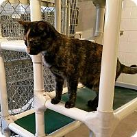 Adopt A Pet :: Glitter - Geneseo, IL