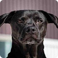 Adopt A Pet :: BABY - Palmer, AK