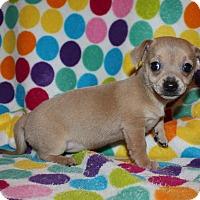 Adopt A Pet :: Aurora - Henderson, NV