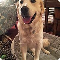 Adopt A Pet :: Nigel - BIRMINGHAM, AL