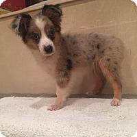 Adopt A Pet :: Wobbly - Houston, TX