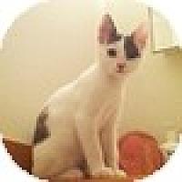 Adopt A Pet :: Gunther - Vancouver, BC