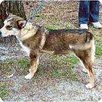 Adopt A Pet :: Megan - Clementon, NJ