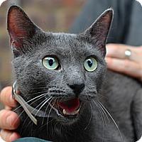Adopt A Pet :: Raina - Brooklyn, NY