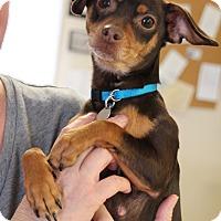 Adopt A Pet :: Jozie - Marietta, GA