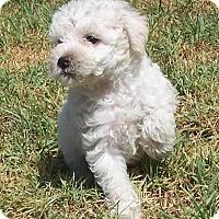 Adopt A Pet :: Elise - La Habra Heights, CA