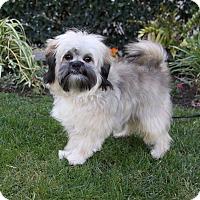 Adopt A Pet :: PHIPPS - Newport Beach, CA