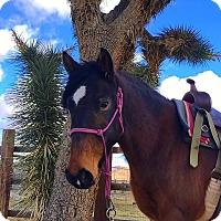 Adopt A Pet :: Volari - Lancaster, CA