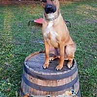 Adopt A Pet :: Pride - Royal Palm Beach, FL