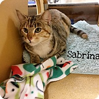 Adopt A Pet :: Sabrina - Foothill Ranch, CA