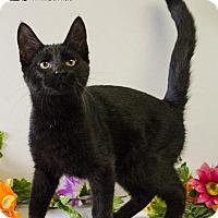 Adopt A Pet :: RAIMI - Sandusky, OH