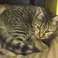 Adopt A Pet :: Sweetie - oakland park, FL
