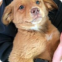 Adopt A Pet :: Lenny - SOUTHINGTON, CT