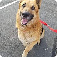 Adopt A Pet :: Kevin aka Debo - Sparks, NV
