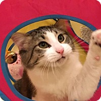 Adopt A Pet :: Mario - Verona, WI