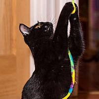 Adopt A Pet :: Jon Snow - Brooklyn, NY