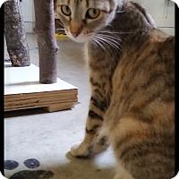 Adopt A Pet :: Tinker Bell - Jackson, MO