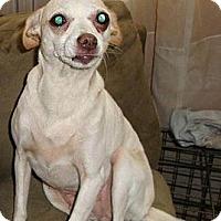 Adopt A Pet :: Sassy - Leesport, PA