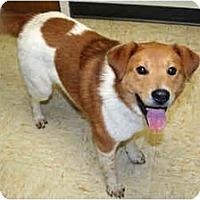 Adopt A Pet :: Colbee - Racine, WI