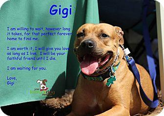 Pit Bull Terrier/Labrador Retriever Mix Dog for adoption in Alpharetta, Georgia - Gigi