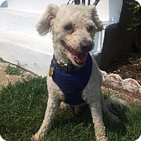 Adopt A Pet :: Donnie - Plainview, NY