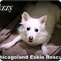 Adopt A Pet :: Izzy - Elmhurst, IL