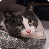 Adopt A Pet :: Rudy - Winchendon, MA
