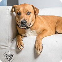 Adopt A Pet :: Venus - Inglewood, CA