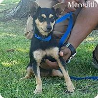 Adopt A Pet :: Meredith - Laplace, LA