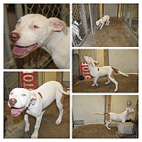 Adopt A Pet :: ICE - Beaumont, TX