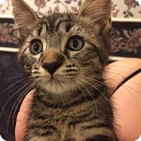 Adopt A Pet :: Jethro - Orlando, FL