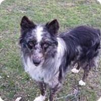 Adopt A Pet :: Bubba Boy - Arrives 6-3-17 - Hillside, IL