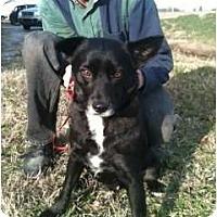 Adopt A Pet :: Boykin - Courtesy post - Glastonbury, CT