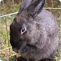 Adopt A Pet :: Opal - Huntsville, AL
