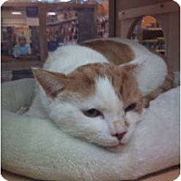 Adopt A Pet :: Sonny - Modesto, CA