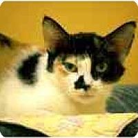 Adopt A Pet :: Phoebe - Marietta, GA