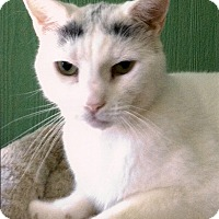 Adopt A Pet :: Stevie - Medway, MA