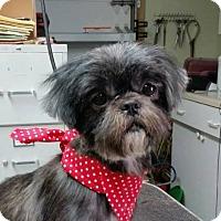Adopt A Pet :: LEIA - Boca Raton, FL
