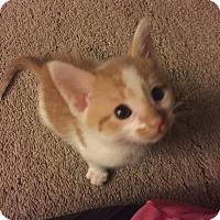 Adopt A Pet :: Oliver - Rockford, IL